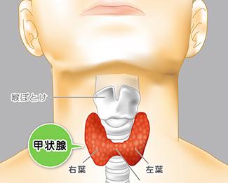 低い だけ 甲状腺 tsh